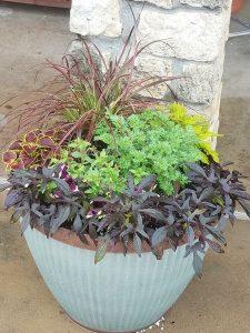 coleus, ornamental grass, ornamental sweet potato vine, artemesia, petunias