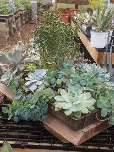 assorted succulents